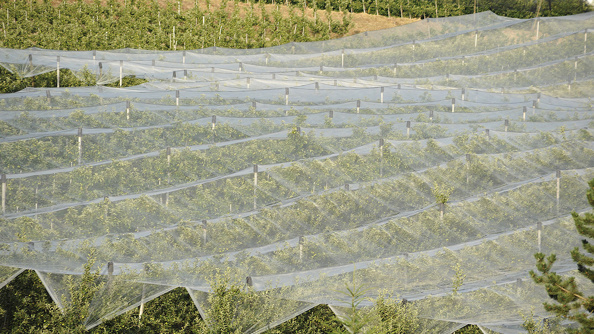 The Characteristics of Non-Woven Fabric and its Use in Agriculture